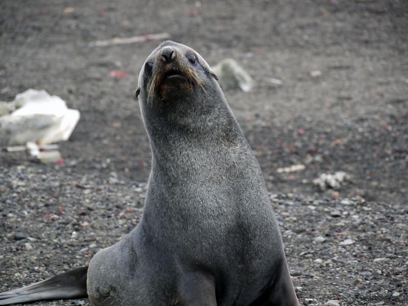 1629 - Deception Island - 2011-02-23 - P1070371