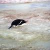 0164 - Half Moon Island - 2011-02-19 - P1050661