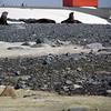 0170 - Half Moon Island - 2011-02-19 - P1010599