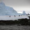 1317 - Detaille Island - 2011-02-21 - P1070030