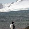 0223 - Half Moon Island - 2011-02-19 - P1050692