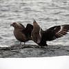 1268 - Detaille Island - 2011-02-21 - P1060954