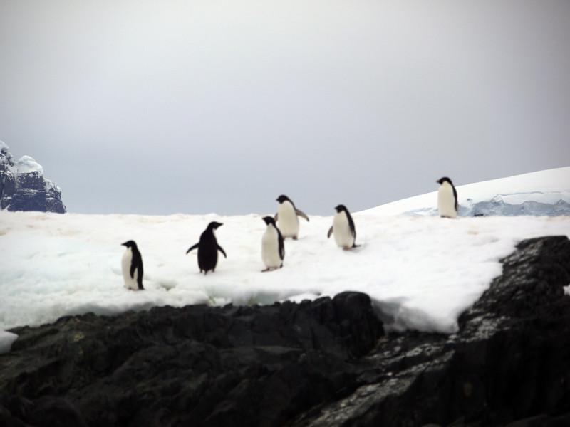1306 - Detaille Island - 2011-02-21 - P1060999