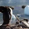 0491 - Neko Harbour - 2011-02-20 - P1060008