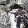 0201 - Half Moon Island - 2011-02-19 - P1010627