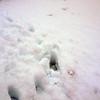1241 - Detaille Island - 2011-02-21 - P1060927