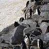 0261 - Half Moon Island - 2011-02-19 - P1050747