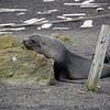 1638 - Deception Island - 2011-02-23 - P1070394