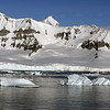 0749 - Cuverville Island - 2011-02-20 - P1060316