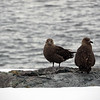 1267 - Detaille Island - 2011-02-21 - P1060950