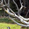 0044---Ushuaia---2011-02-17---P1010466