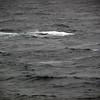 3713 - Willis Islands - 2011-03-03 - P1100071