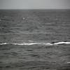 3712 - Willis Islands - 2011-03-03 - P1100067