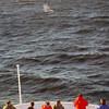 3745 - At Sea - 2011-03-05 - P1100091