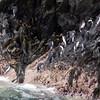 3694 - Willis Islands - 2011-03-03 - P1100053