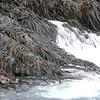 3689 - Willis Islands - 2011-03-03 - P1100046