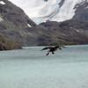 1781 - Drygalski Fjord - 2011-02-26 - P1070596