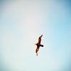 3763 - At Sea - 2011-03-05 - P1100129