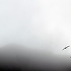 3698 - Willis Islands - 2011-03-03 - P1100055