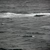 3714 - Willis Islands - 2011-03-03 - P1100072