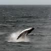 3716 - Willis Islands - 2011-03-03 - P1100064