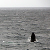 3715 - Willis Islands - 2011-03-03 - P1100076