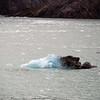 1780---Drygalski-Fjord---2011-02-26---P1070595
