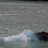 1784---Drygalski-Fjord---2011-02-26---P1070611