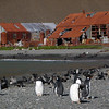 Gentoo penguins on the beach near an abandoned whaling station in Stromness, South Georgia