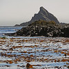 Kelp beds at Elsehul, South Georgia