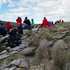 Eager spectators await the landings and take-offs of the black browed albatrosses on New Island, Falkland Islands