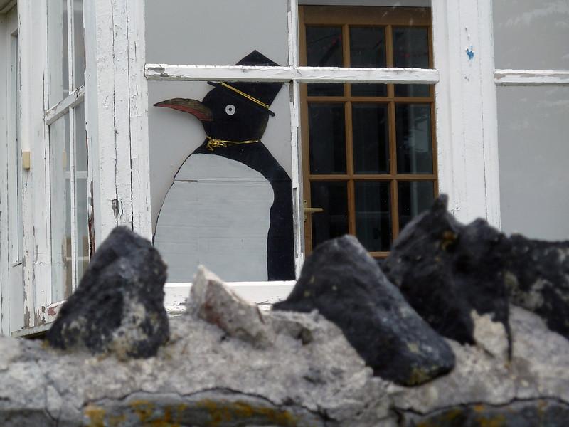 Mr Penguin invades Stanley, Falkland Islands!