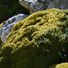 Curious plant life on the slopes of Mount Tumbledown, Falkland Islands