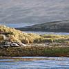 New Island, Falkland Islands