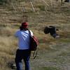 Johnny rook attack on Carcass Island, Falkland Islands