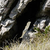 3864 - Mt Tumbledown - 2011-03-06 - P1100199