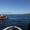 4102 - Carcass Island - 2011-03-07 - P1100551