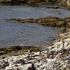 3969 - Carcass Island - 2011-03-07 - P1100260