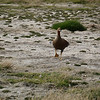 4138 - New Island - 2011-03-07 - P1100593