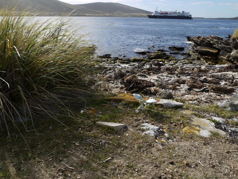 4002 - Carcass Island - 2011-03-07 - P1100347