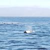4114 - Carcass Island - 2011-03-07 - P1100528