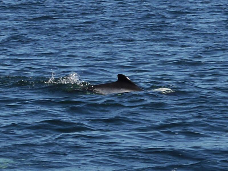 4115 - Carcass Island - 2011-03-07 - P1100557