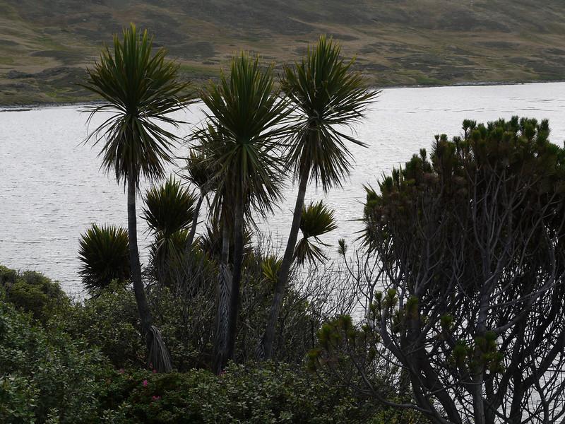 3926 - Carcass Island - 2011-03-07 - P1100409