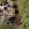 3956 - Carcass Island - 2011-03-07 - P1100258