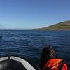 4104 - Carcass Island - 2011-03-07 - P1100548