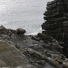 4304 - New Island - 2011-03-07 - P1100817