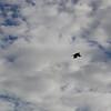 4356 - New Island - 2011-03-07 - P1100820