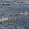 4053 - Carcass Island - 2011-03-07 - P1100363