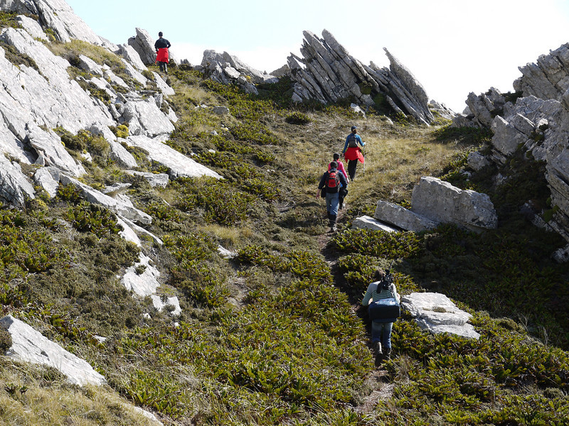 3859 - Mt Tumbledown - 2011-03-06 - P1100208