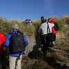 3954 - Carcass Island - 2011-03-07 - P1100275